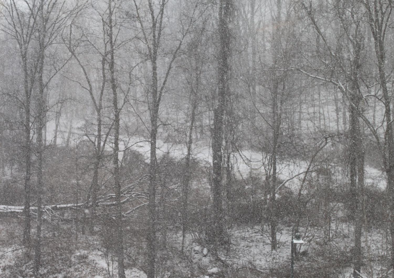 During one of the brief snowstorms this season, the snow covers the trees and road.