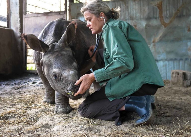 Dr. Deborah McCauley working with a rhino.