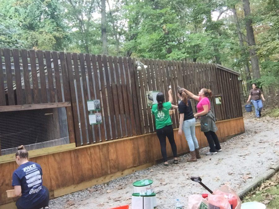 Students volunteering at the Teatown Lake Reservation. (Photo by Joseph Tucci)