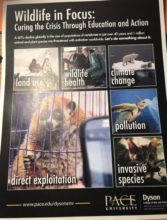 Poster for the Wildlife in Focus series. The series, presented by Dyson Colleges Institute for Sustainability and the Environment, debuted its first event on Saturday, October 19th.