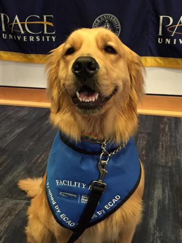 Paw-fessor Spirit in his class, Canines Assisting in Health, one of the courses being offered this Spring.